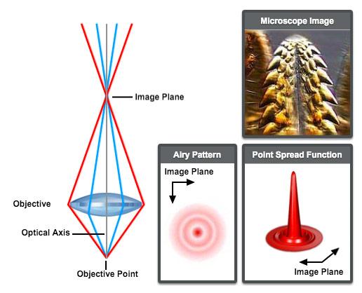 astigmatism | microscopyu, Skeleton