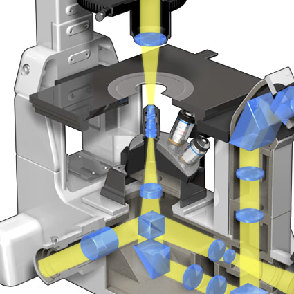 Inverted Microscope Optical Pathways Microscopyu